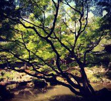 カキョクカフェ #13 大きな森の木の庭で〜その3〜